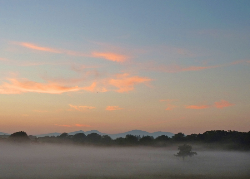 mod_C-LS-tree-mist-sunset-01-sq-hdr