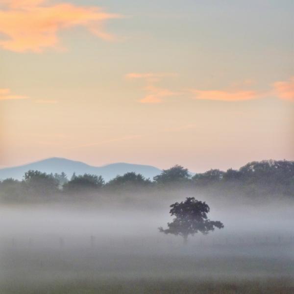 mod_C-tree-mist-sunset-01-sq-hdr