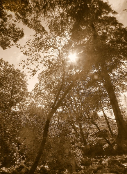 mod_S-Sutherlands grove falls sun trees sepia HDR