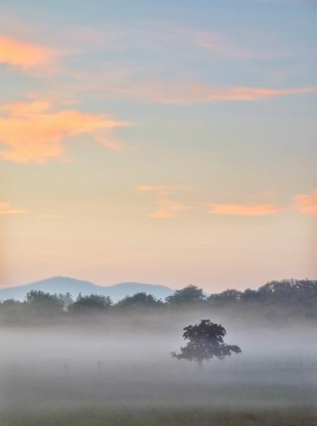 mod_S-tree-mist-sunset-01-pt-hdr